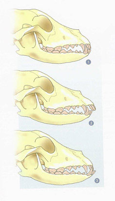 Anatomi - Tenner